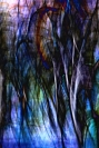 Steve Hazael - Abstract Trees, NSW